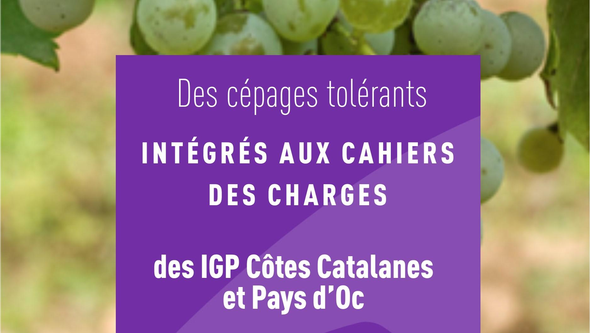 Des c pages tol rants int gr s aux cahiers des charges des - Chambre agriculture ille et vilaine ...