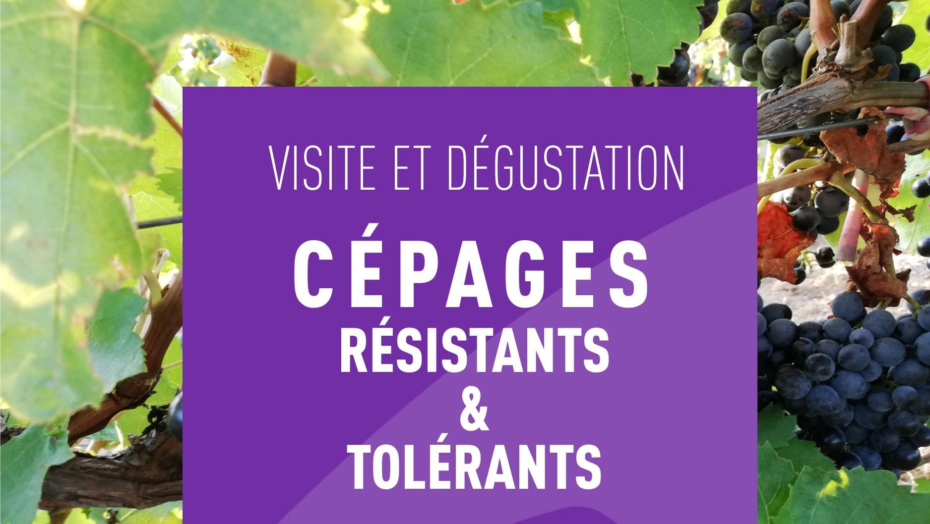 Visite et d gustations nouveaux c pages tol rants aux - Chambre agriculture ille et vilaine ...